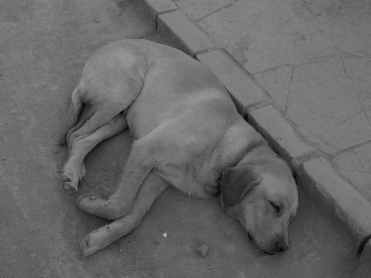 el-descanso
